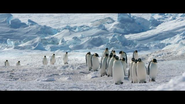 Die Reise der Pinguine 2 Video 3
