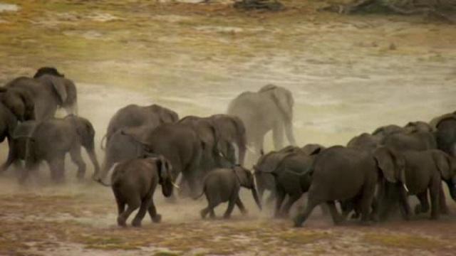 Zurück in die Wildnis - Ein kleiner Elefant auf dem Weg in die Freiheit Video 3